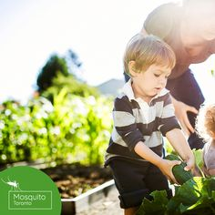Protect Your Children From Mosquitoes and Ticks . Mosquitoes, Swansea, Ticks, Your Child, Repeat, Toronto, Monitor, Seasons, Children