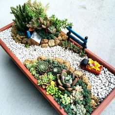 Things to consider depending on a beautiful garden Basic principles of garden design Drive in … – Trend Innen Pflanzen 2020 Mini Cactus Garden, Succulent Gardening, Garden Terrarium, Succulent Pots, Cacti And Succulents, Planting Succulents, Dish Garden, Succulent Arrangements, Miniature Fairy Gardens