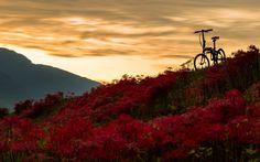 DAHON folding bike Instagram photo by Kamedai • Sep 22, 2016 at 1:15pm UTC