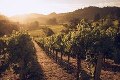 Hess Vineyards Napa Valley by Matthias Klappenbach