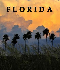 Florida Poster Art Print by David Lee Thompson. All prints are professionally printed, packaged, and shipped within 3 - 4 business days. Choose from multiple sizes and hundreds of frame and mat options. Florida Style, Florida Girl, Visit Florida, Florida Living, Old Florida, Vintage Florida, Florida Travel, Florida Beaches, South Florida