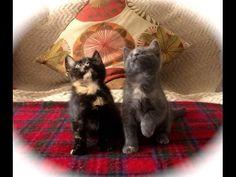 Kitten Jam - they got the moves