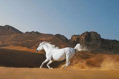 「馬」 生き物の中でもっとも美しいもののひとつが馬だと感じる。 特にその走る姿は神話的な生き物に見える。
