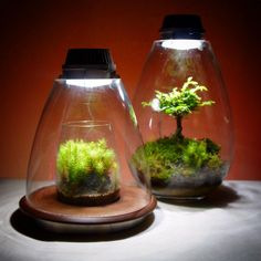Mosslight-dome  #苔あかり #モスライト#mosslight #LED#Lightning#コケ#moss#terrarium…