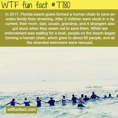 Florida beach goers save an entire family from drowning - WTF fun facts