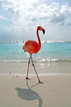 Wonderful flamingo on the beach !