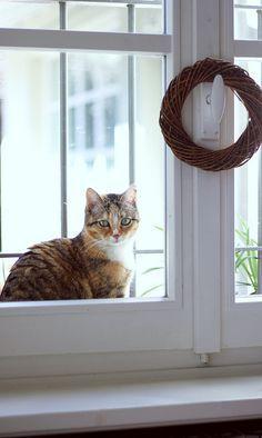 Cat at the windows by Alis *avec Eva* on Flickr.