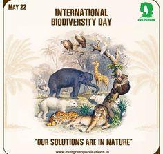 Important Dates, Evergreen, Nature, Movie Posters, Art, Art Background, Naturaleza, Film Poster, Kunst