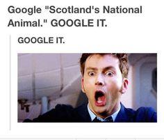 YESSSSSSSSSSSSSSSSSSSSSSSSSS! <3 Scots