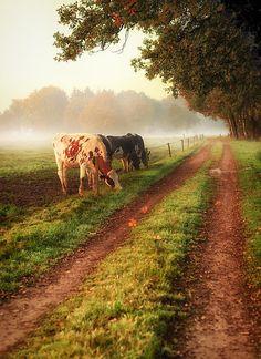 Country road down on the farm Country Farm, Country Life, Country Living, Country Roads, French Country, Cenas Do Interior, Esprit Country, The Farm, Vie Simple