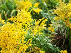 close-up shot of a plant. - Detailed shot of yellow plant.