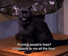 Salem- Sabrina the Teenage Witch on We Heart It Salem Sabrina, Sabrina Cat, Cat Quotes, Movie Quotes, Salem Cat, Salem Saberhagen, Thats 70 Show, Oui Oui, My Spirit Animal