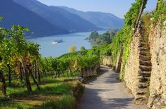 Wachau the most scenic valley of the Danube known for its rich historical heritage, quality wines and apricots. What A Beautiful World, Beautiful Places, Glamping, Austria, Wachau Valley, Danube River, World Heritage Sites, Beautiful Landscapes, Travel Inspiration