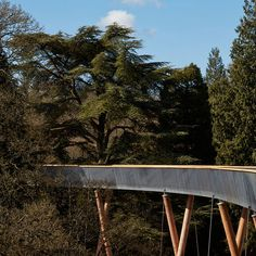 designed by glenn howells architects, the longest treetop walkway in the UK has opened to the public in the national arboretum at westonbirt.