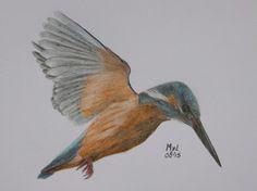 Kingfisher drawing l mariellevanleeuwen@live.nl l ARTINT l 2015-08-29