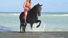 Barbatas a dit « En somme le chamanisme rejoint ma propre vision de l'équitation, qui consiste à demander au cheval ce qu'il veut bien nous offrir, non à lui demander ce que nous voudrions qu'il soit ».