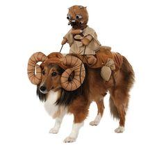 disfraz para perro Morador de las arenas
