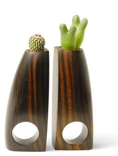 Barbara Uderzo  Rings: Succulent 2007  Wood (ebony macassar), earth, turbinicarpus pseudopectinatus, conophytum  ca. 10 x 2,6 x 3 cm
