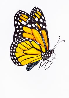 Original Butterfly Illustration Butterfly 3 by rachelledyer Butterfly Clip Art, Butterfly Drawing, Butterfly Painting, Butterfly Watercolor, Monarch Butterfly, Watercolor Art, Yellow Butterfly Tattoo, Illustration Papillon, Butterfly Illustration