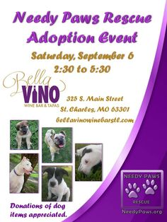 Stop by and meet our dogs on Saturday, Sept 6 from 2:30 to 5:30 at Bella Vino Wine Bar in St. Charles, MO