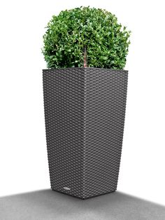 Cubico Cottage Wicker Self-Watering Planter, 22""
