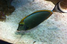 22 Blue Reef Aquarium