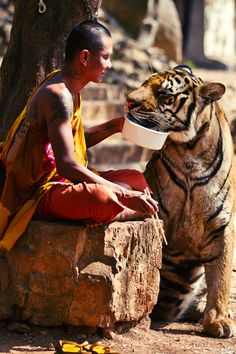 wolverxne:      Tiger and Monk Sharing their Food ~ by: Wojtek Kalka  (via drvgonite)