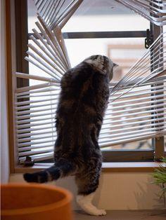 OMG! Maru, the window shade is broken! 9/2, 4-2 私信