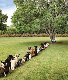 LOL - Line at the tree.