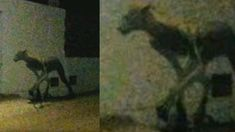Halb Mensch, halb Katze: Mysteriöse Kreatur in Asien entdeckt Painting, Art, Police, Asia, Art Background, Painting Art, Kunst, Paintings, Performing Arts