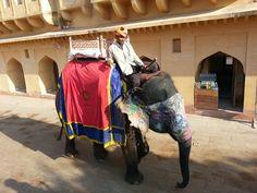 El camino en elefante hacia la fortaleza de Ambar en Jaipur