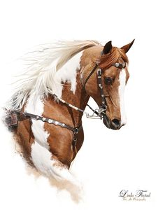 Horse Photograph - Painted Pony by Linda Finstad