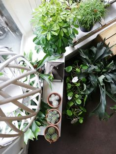 Green, Shop, Plants, Plant, Store, Planting, Planets