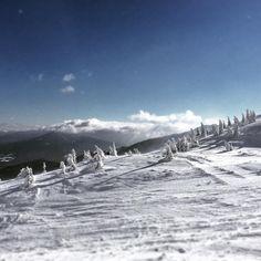 80 отметок «Нравится», 5 комментариев — It's all about love (@ursa__minor) в Instagram: «#dragobrat #украина #карпаты2016 #карпаты #ukraine #snow #snowboarding #драгобрат #зима #winter…»