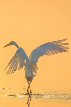 """""""Enlightenment is ego's ultimate disappointment."""" ~ Chögyam Trungpa By: Alhaji Samura Title: 'The Dance' <3 lis"""