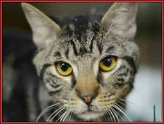 Please save young Lance from death at Manhattan ACC shelter in New York. Please visit pets on death row on Facebook URGENT. To donate foster or adopt.he is a friendly loving boy.