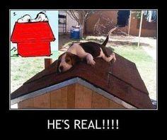 Snoopy Lives