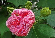 Fleur dans un jardin de Nice, côte d'azur