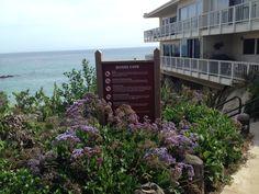 Divers Cove Beach in Laguna Beach Orange County Beaches, Laguna Beach, Mom Blogs, California, Summer, Summer Time