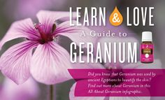 May is the ideal month for geranium flowers to blossom. It's also the perfect month to get to know this floral essential oil! This infographic has all the fun facts and usage tips you need to do just that.  Interested in learning more about YL essential oils? Check out our Ylang Ylang, Cedarwood, and Eucalyptus infographics! ...