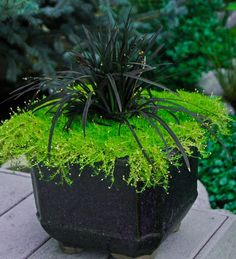 Container Gardening Pots Awesome Tips Plant in Pots and Containers container gardening flowers potted plants patio container plants garden pots ideas Black Flowers, Exotic Flowers, Lavender Flowers, Yellow Roses, Pink Roses, Pink Flowers, Container Plants, Container Gardening, Gardening Tips