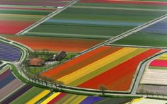 If you want to experience the best of the Netherlands in a road trip, then make sure to take the Bollenstreek Route. The Netherlands has become almost synonymous to tulips, a stunning flower that is not really endemic to the country—the first bulb was actually planted in Dutch soil in the 1500's.