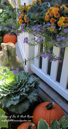 Outdoor Decorating Ideas for Fall. Love the galvanized window box on the fence with mums and flowering kale and pumpkins in the garden.