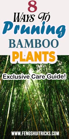 #Pruning #BambooPlants pruning bamboo in pots does bamboo regrow when cut pruning clumping #bamboo how to make #luckybamboo grow more branches if you cut bamboo will it grow new roots topping #bamboo thinning bamboo topping lucky bamboo Bamboo In Pots, Bamboo Plants, Feng Shui Lucky Bamboo, Clumping Bamboo, New Roots, Branches, Herbs, Herb, Eggplant