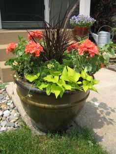 Geranium, sweet potato vine and red fountain grass