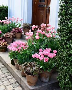 Don't forget to plant tulips . Don't forget to plant tulips Garden Bulbs, Garden Planters, Container Plants, Container Gardening, Beautiful Gardens, Beautiful Flowers, Spring Bulbs, Outdoor Plants, Small Gardens