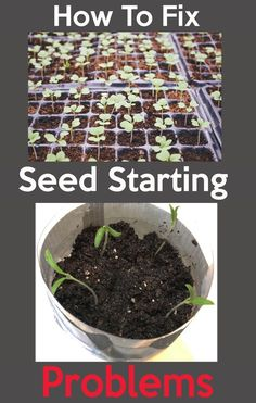How to Fix Seed Starting Problems Even though starting seeds is fun and exciting, It also has its own challenges, These are some of the Common seed starting problems and how you can fis them. #seedstarting #seedstarter #greenhouse #bottlegreenhouse #grow #garden #seeds #seedlings #selfwatering #grow #seed #indoor #sodabottle #seedproblems #gardenproblems