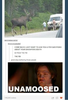 SUPERNATURAL QUOTES - Sam is unamoosed - I found this ridiculously funny. Sam Winchester - Jared Padalecki<<<< I laughed out loud and my cousin was staring at me. Castiel, Sammy Supernatural, Supernatural Quotes, Sherlock Quotes, Supernatural Bloopers, Supernatural Tattoo, Supernatural Wallpaper, Sam Dean, Jared Padalecki