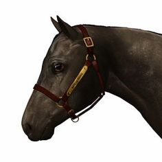 The plain halter with a nameplate. You can find a written tutorial on how to customize the halter here . Horse Bridle, Friesian Horse, My Sims, Sims Cc, Sims Pets, Sims 3 Mods, Horse Games, Animals And Pets, Horses