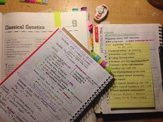Meu dia-a-dia nos meus estudos, ou até mesmo nas minhas leituras eu uso bastante post-it. É uma das melhores coisas para nos organizarmos.